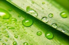 Opinión del primer de la hoja verde Foto de archivo libre de regalías