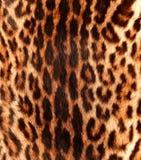 Detalle de una piel del ocelot Fotos de archivo libres de regalías