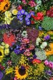 Opinión del primer de las flores 2 del gypsophila Foto de archivo