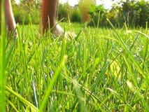 Opinión del primer de las piernas femeninas que caminan en campo verde en verano almacen de metraje de vídeo