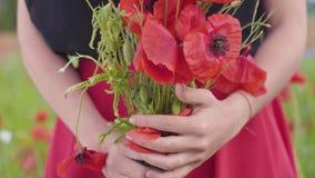 Opinión del primer de manos femeninas en un ramo de la tenencia del campo de la amapola de flores Conexi?n con la naturaleza Armo metrajes