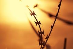 Opinión del primer de un alambre de púas Foto de archivo