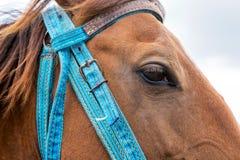 Opinión del primer del bozal del caballo Imágenes de archivo libres de regalías