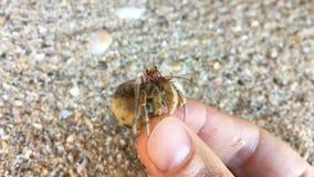 Opinión del primer el cangrejo de ermitaño con la cáscara en mano humana almacen de metraje de vídeo