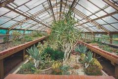 Opinión del primer en los succulents Imagen de archivo