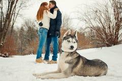 Opinión del primer del husky siberiano precioso que pone en la nieve en el fondo borroso de los pares que se besan Imagen de archivo libre de regalías