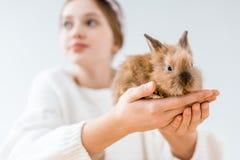 Opinión del primer la muchacha que sostiene el conejo peludo lindo Imagen de archivo libre de regalías