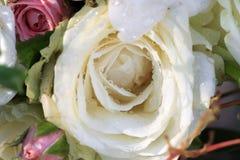 Opinión del primer la rosa hermosa del blanco con descenso del agua Fotografía de archivo libre de regalías