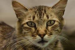 Opinión del primer del ` s del gato Imagen de archivo
