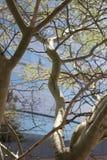 Opinión del retrato de un árbol en un cuadrado de ciudad en Durban, Suráfrica Fotos de archivo libres de regalías