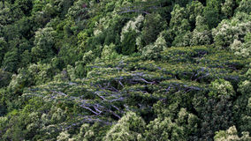 Opinión del sendero de Trois Freres del Glacis en Seychelles Fotografía de archivo