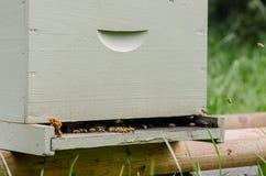 Opinión del tres cuartos de la caja de la apicultura Foto de archivo