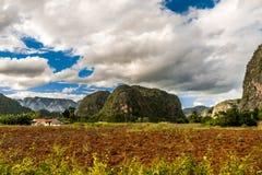 Opinión del valle de las cervezas inglesas del ½ del ¿de Viï en Cuba Naturaleza irreal con los lagos, montaña, árboles, fauna Cie foto de archivo
