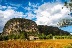 Opinión del valle de las cervezas inglesas del ½ del ¿de Viï en Cuba Naturaleza irreal con los lagos, montaña, árboles, fauna Cie Fotos de archivo
