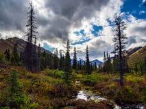 Opinión del valle en Alaska, el río y árboles Imagen de archivo