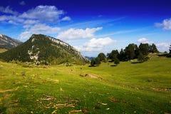 Opinión del verano del prado de la montaña imagenes de archivo