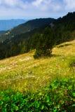 Opinión del verano del prado de la montaña foto de archivo libre de regalías