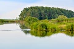 Opinión del verano del lago con la reflexión de la hierba y de los árboles en superficie del agua imagen de archivo libre de regalías