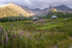 Opinión del verano del valle de Gasienicowa Montañas de Tatra polonia Foto de archivo libre de regalías