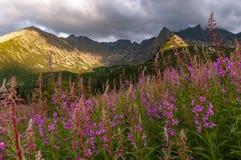 Opinión del verano del valle de Gasienicowa Montañas de Tatra polonia Fotos de archivo