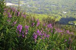 Opinión del Wildflower Imagen de archivo