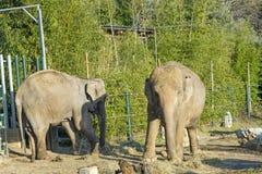 Opinión el elefante en el parque zoológico fotos de archivo