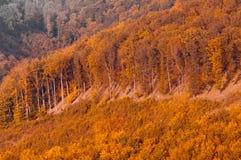 Opinión en montaña, paisaje del bosque del otoño del bosque fotos de archivo libres de regalías