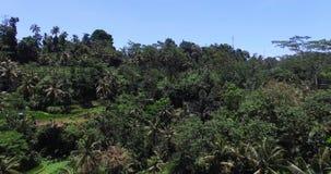 Opinión erial del  de Ð sobre los árboles y el bosque de las palmas en la selva metrajes