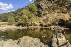 Opinión escénica del paisaje del campo de una corriente del agua dulce Imagenes de archivo