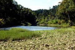 Opinión escénica el río que fluye y Rocky Bank In The Forest de A imagen de archivo