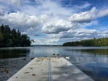Opinión escénica hermosa del paisaje del verano del cielo nublado y del bosque del agua con los pájaros del pato silvestre Foto de archivo