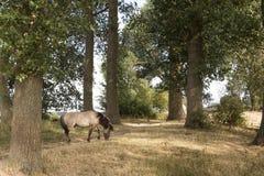 Opinión escénica sobre los bancos del Bisonbaai en el Ooijpolder cerca de Nimega Güeldres en los Países Bajos con el caballo de K fotografía de archivo libre de regalías