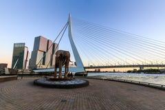 Opinión exterior Erasmus Bridge en la puesta del sol y el Mosa Foto de archivo libre de regalías