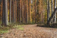 Opinión Forest Road, dirección más profunda en el bosque en Sunny Summer Day, imagen en parte borrosa con el espacio libre para e fotos de archivo