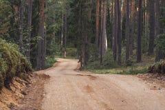 Opinión Forest Road Tourist Hiking Path, dirección más profunda en el bosque en Sunny Summer Day, imagen en parte borrosa con lib foto de archivo libre de regalías