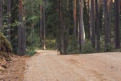 Opinión Forest Road Tourist Hiking Path, dirección más profunda en el bosque en Sunny Summer Day, imagen en parte borrosa con lib imagen de archivo libre de regalías