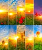 Opinión girasoles y amapolas con el sol naciente fotografía de archivo