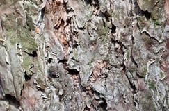 Opinión gris del cierre de la corteza de árbol Imagen de archivo