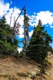 Opinión hermosa del bosque en el parque nacional olímpico, Washington, los E.E.U.U. imagen de archivo libre de regalías