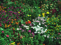 Opinión hermosa del jardín Fotos de archivo