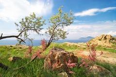 Opinión hermosa del mar con el árbol y los arbustos en flor Foto de archivo libre de regalías