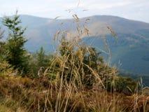 Opinión hermosa del otoño de las colinas vecinas Foto de archivo libre de regalías