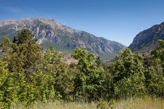 Opinión hermosa del paisaje del barranco de Provo con el cielo azul claro y de los árboles vibrantes de las plantas verdes en fre Fotografía de archivo