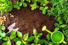 Opinión herramientas que cultivan un huerto, rosmary superiores, el pepino, las plantas de fresa y los almácigos en suelo imagen de archivo