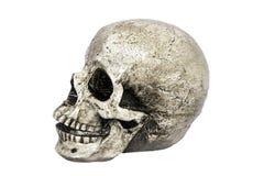 Opinión humana del cráneo foto de archivo libre de regalías