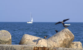 Opinión idílica de la playa Imagen de archivo
