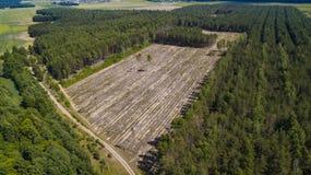 Opinión ilegal de la tala de árboles del abejón foto de archivo
