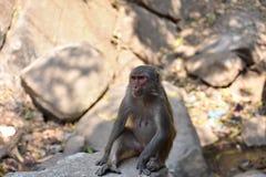 Opinión impresionante la madre del mono que se sienta en una piedra que parece buena Foto de archivo