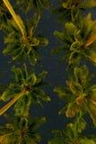 Opinión inferior de las palmeras tropicales sobre fondo estrellado del cielo nocturno Imagen de archivo