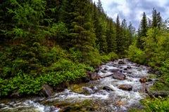Opinión inferior sobre la corriente de la montaña del flujo en bosque Foto de archivo libre de regalías